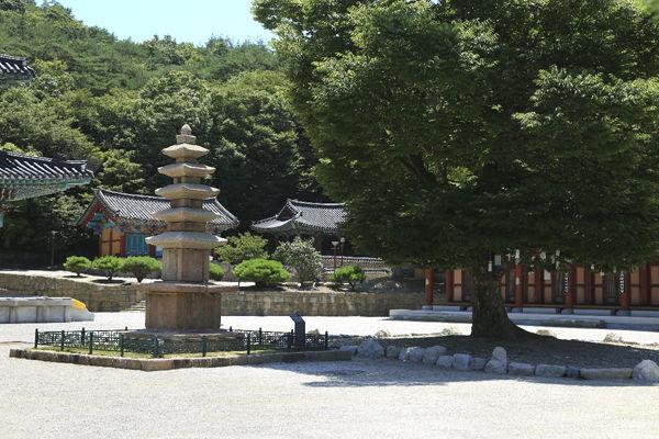 대웅보전 앞 마당에 오층석탑과 느티나무