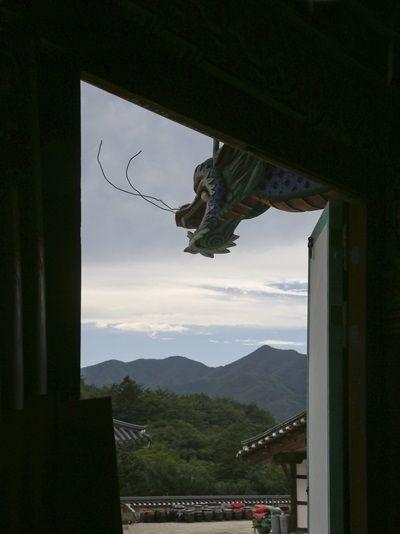 대웅전의 기둥 위에 새겨진 용, 마치 하늘로 날아오르는 듯하다.