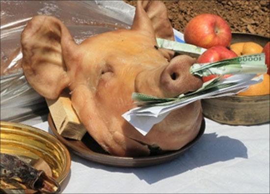 상량고사를 지낼 때는 돼지머리를 놓고 입과 코에 돈을 바친다.