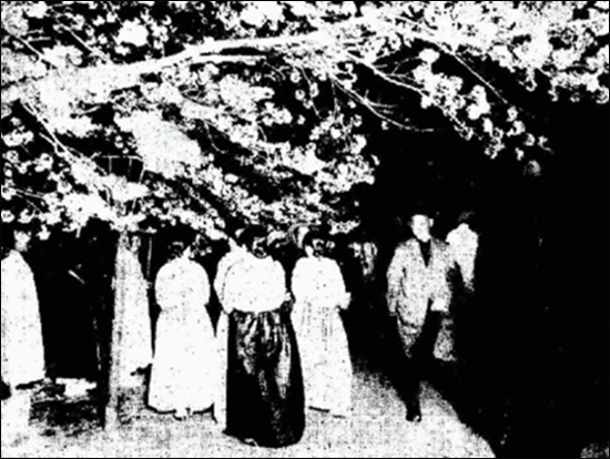 1927년 4월 23일 동아일보 기사에 실린 창경원 밤 벚꽃놀이