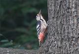 수원수목원, 천연기념물 원앙‧참매 등 조류 32종 관찰